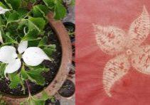 cornus flower in shibori stitch resist